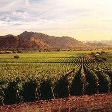 Виноградники Центральной Долины